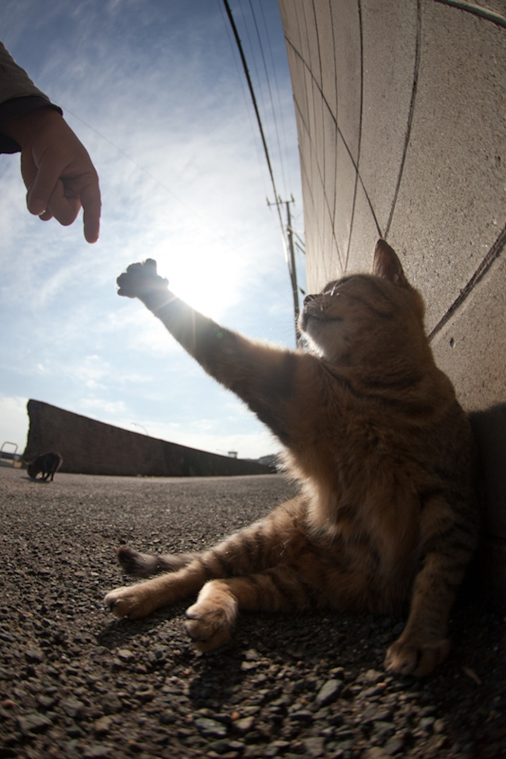 give me five!!